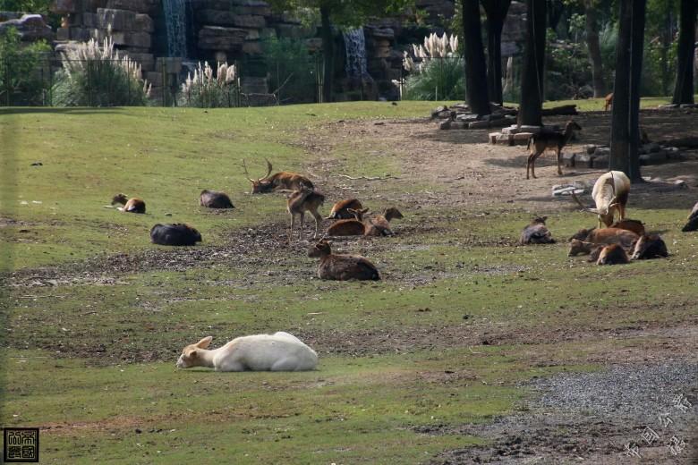 上海野生动物园随拍~!~!|数码摄影 - 昆山论坛