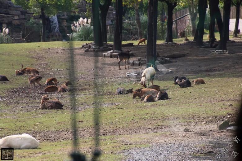 上海野生动物园随拍~!~!|走遍天下 - 昆山论坛
