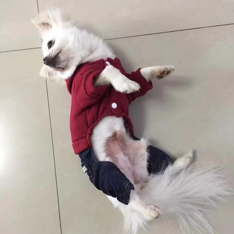 昆山人狗交配_发春的狗狗|宠物宝贝 - 昆山论坛