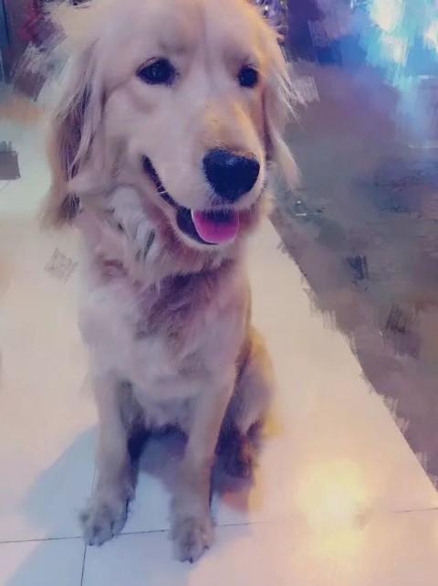 求助帖(狗狗被偷,昆山附近哪有狗贩子或者狗市场)