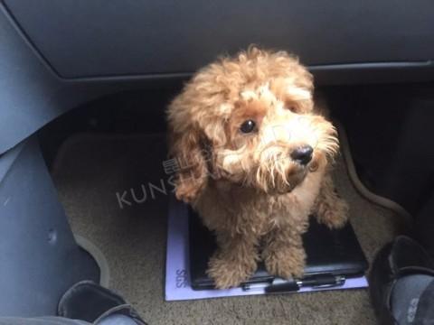 10月18下午4点30分在黑龙江路和园明路路口捡到一只小狗狗