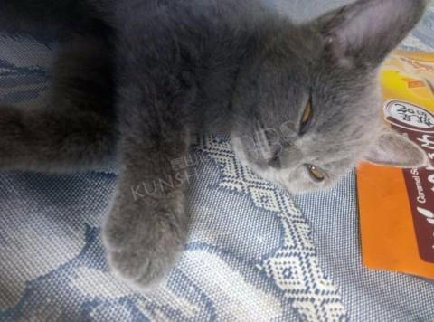 千灯华美达广场丢失一只猫