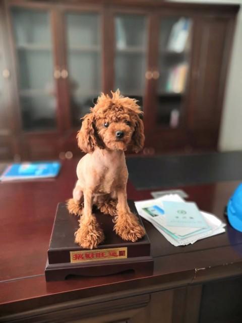 泰迪狗,海星路台湾交易中心
