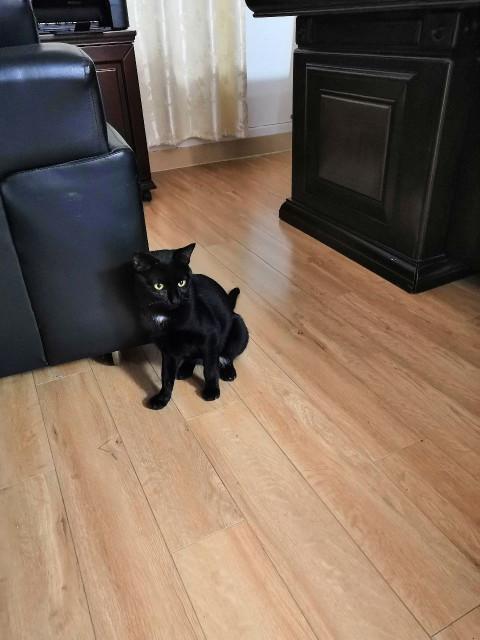 一只流浪黑猫