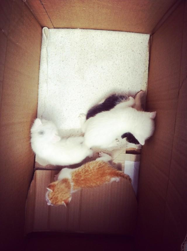刚出生一个月的小猫,求收养图片