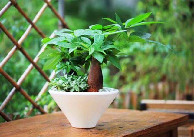 用大蒜来养殖植物