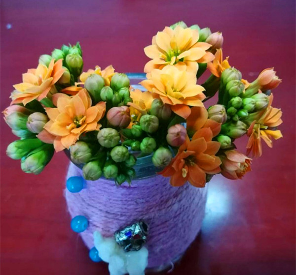 漂亮的花朵