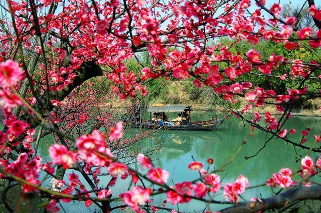 春来第一枝 西溪探香雪