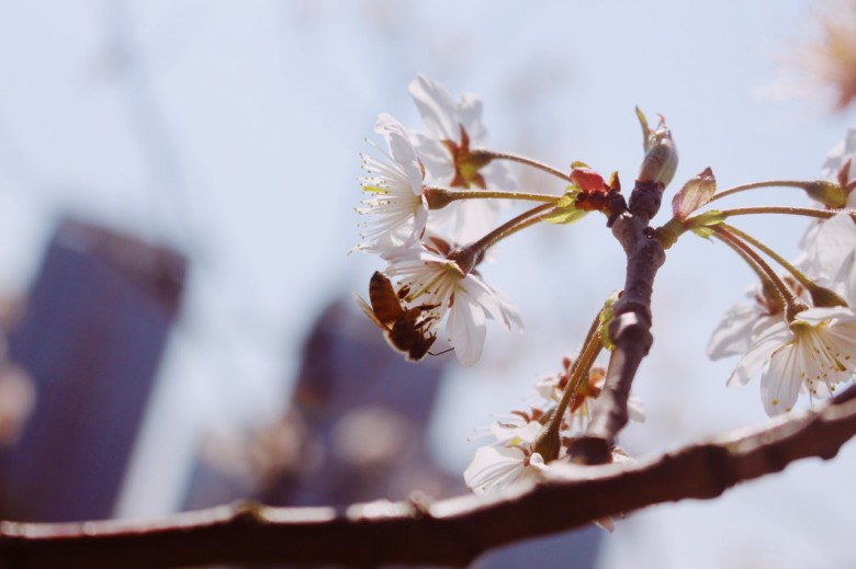 小院春风木下家,长街短卷插樱花。
