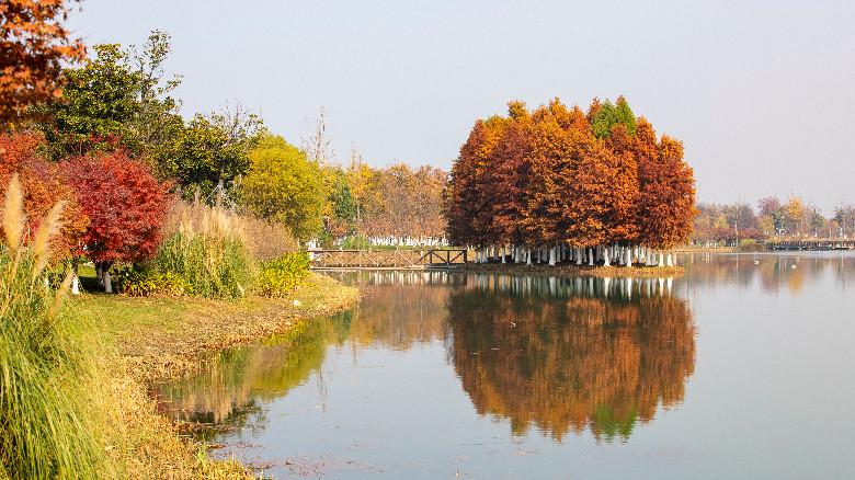 夕露園的秋