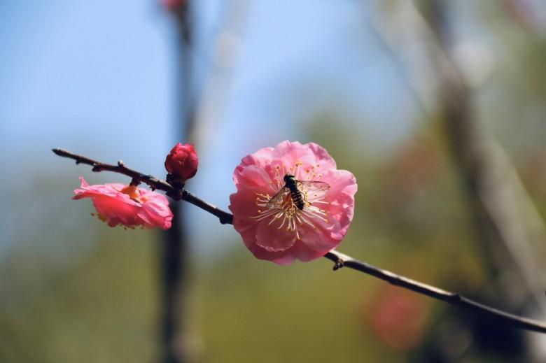 梅花雨梨花月又是一年花开时