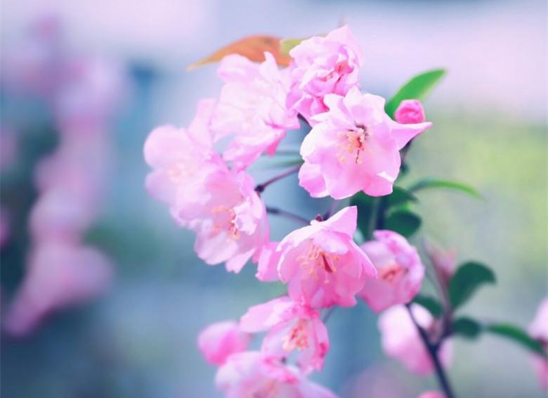 春色撩人百花爭艷