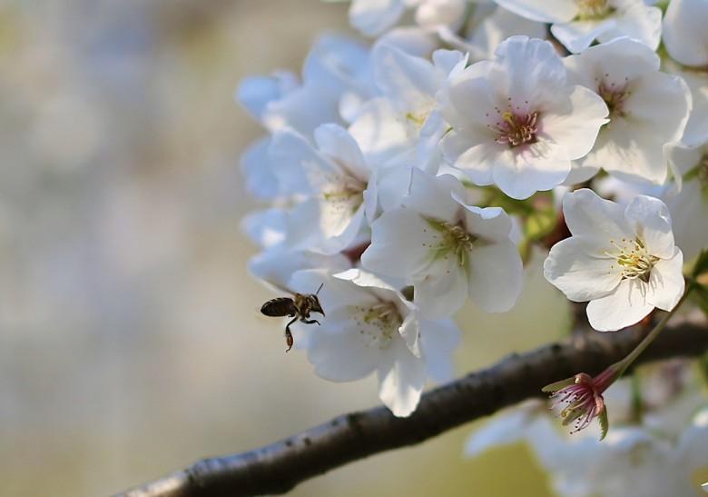 春已至,花已开