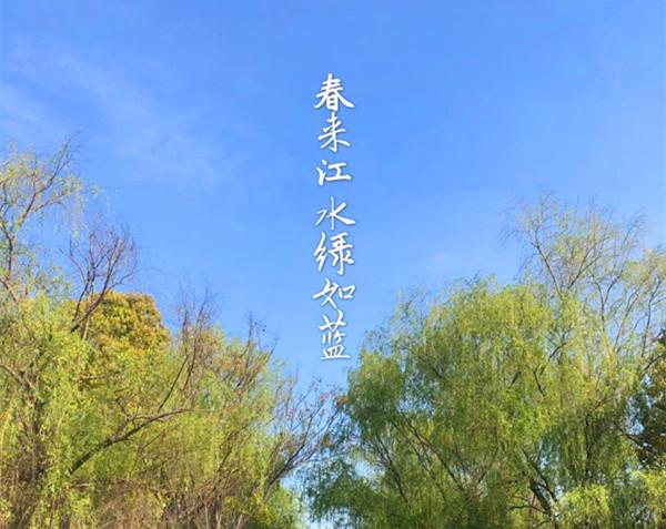 春來江水綠如藍