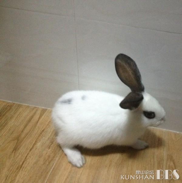 壁纸 动物 兔子 600_604