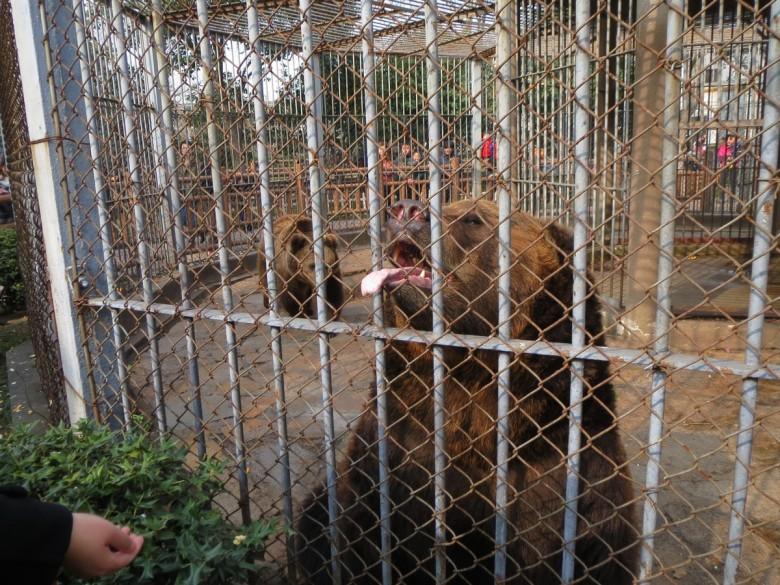 苏州动物园游玩记!