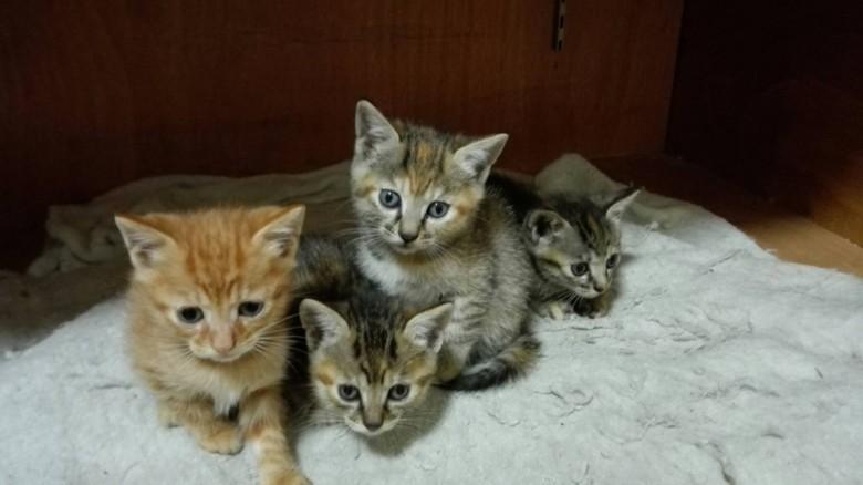 可爱的小猫咪送人 宠物宝贝