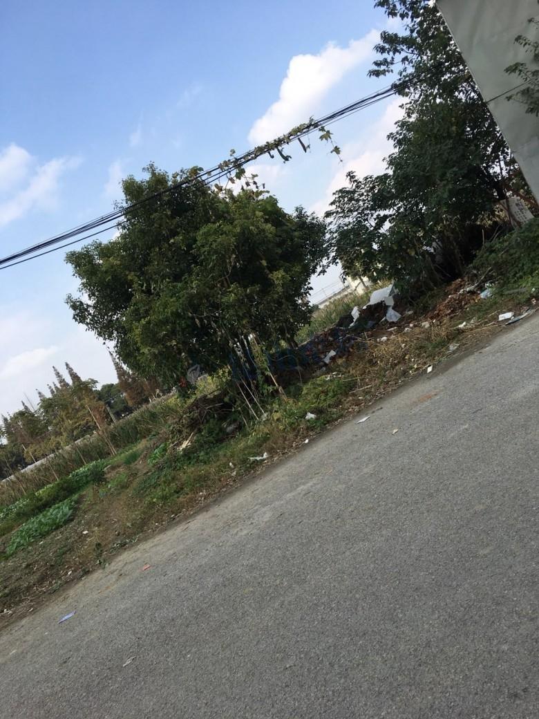 巴城锦绣路金湖银滩门口对面的马路边,垃圾荒草成堆,无人管理